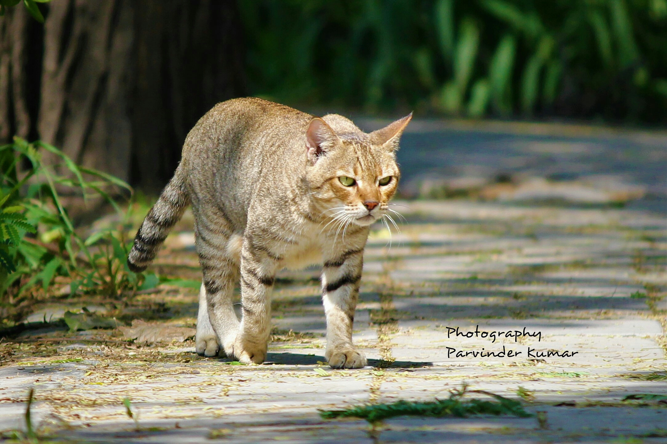 Photo of the Day- The Cat-Walk