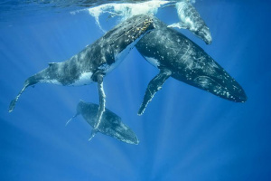 Whales live and move about in groups