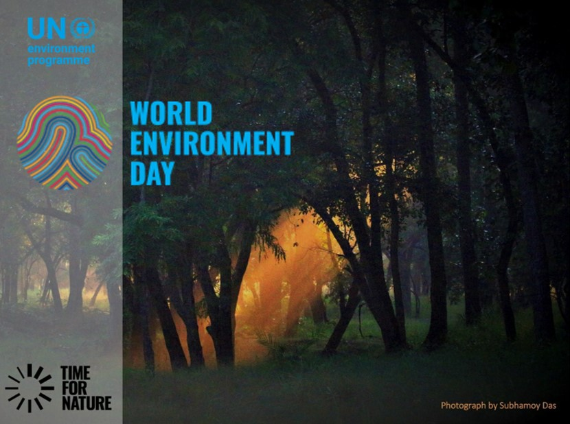 World Environment Day 2020: Why Forests Matter for Our Survival