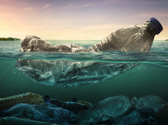 Plastics and Ecosystem: Is it Really All Negative!
