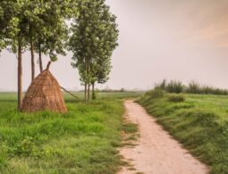 The 5 Biggest environmental problems in the Indian Rural Areas
