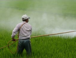 Harmful Effects of Pesticides