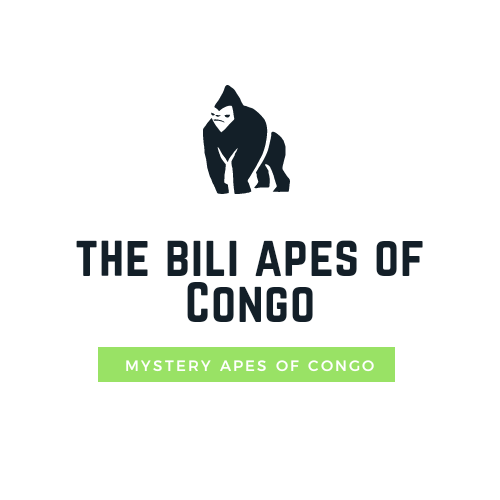 The Bili apes of congo