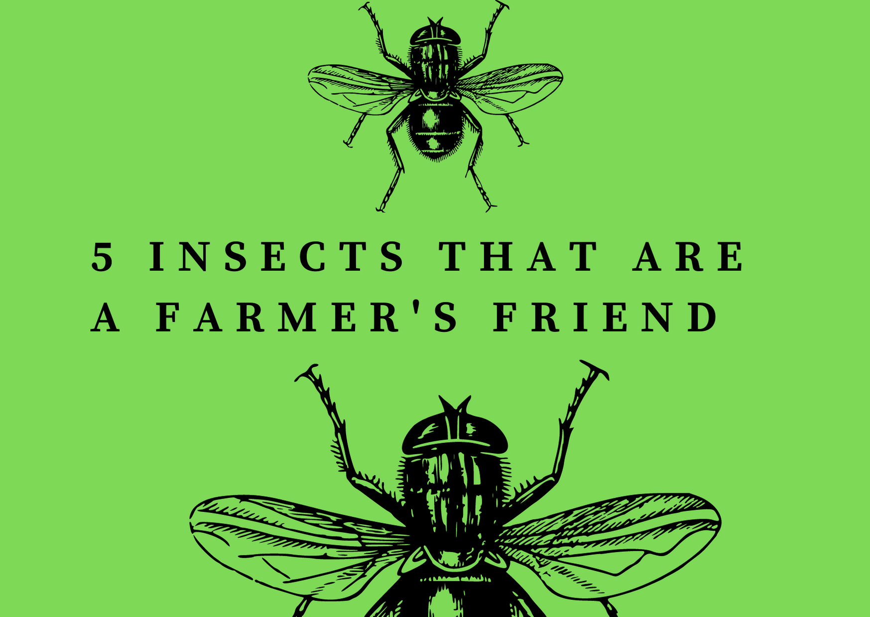5 Insects that are a Farmer's Friend