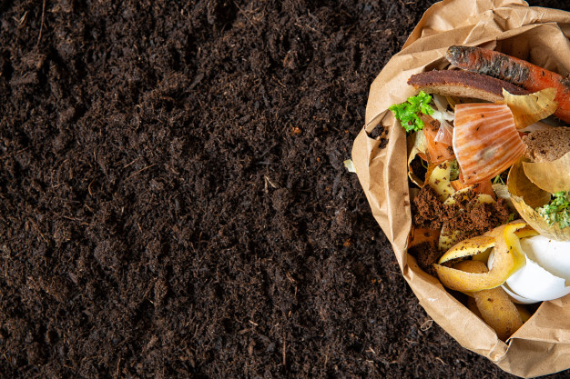 Biodegradable vs. Compostable- Know the difference