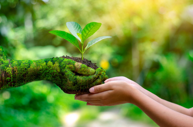 12 simple ways to help the environment at home